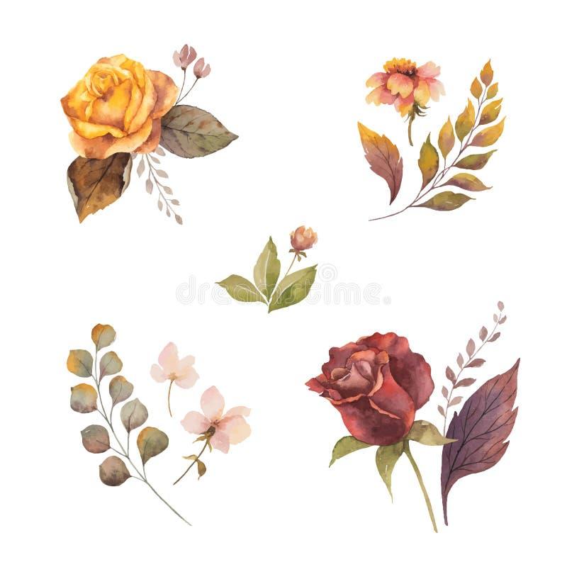 Automne de vecteur d'aquarelle réglé avec des roses et des feuilles d'isolement sur le fond blanc illustration stock