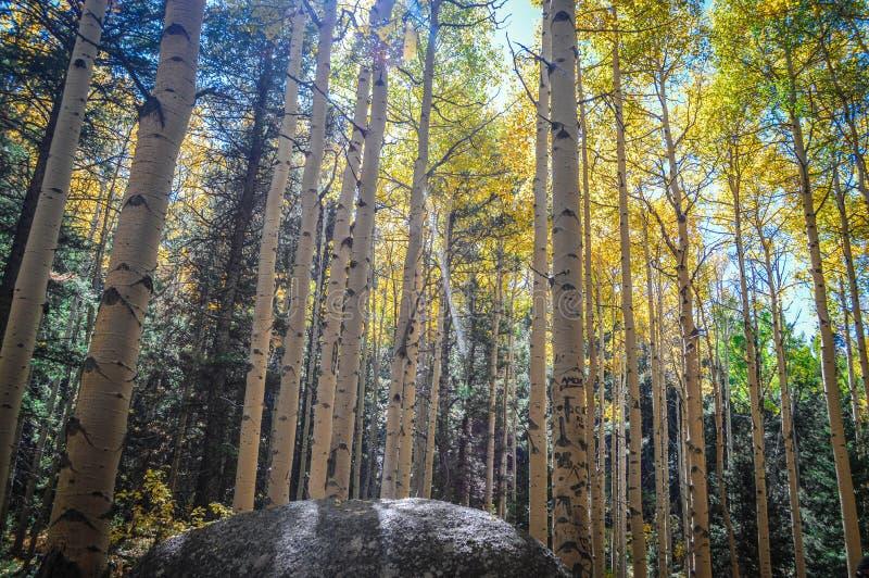 Automne du Colorado image libre de droits