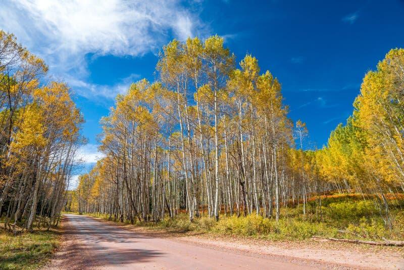 Automne du Colorado images libres de droits