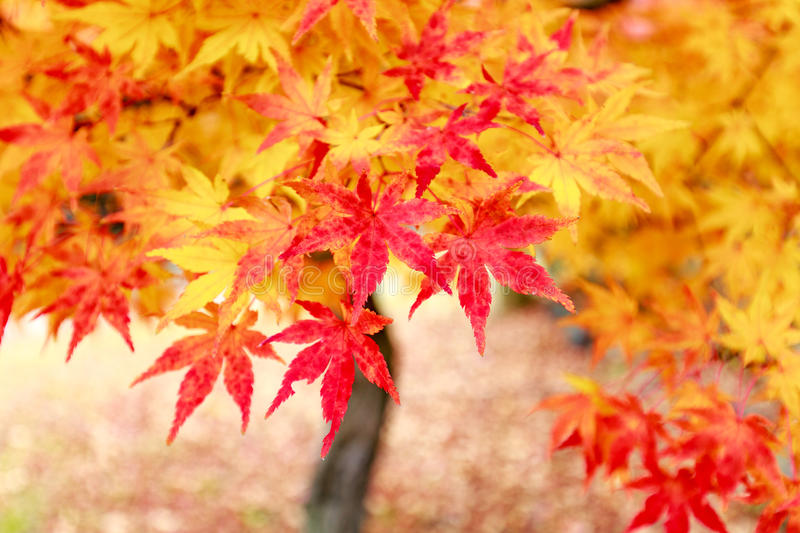 Automne du Japon photo stock
