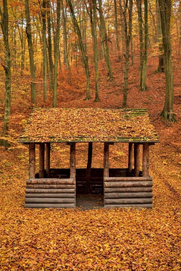 Automne en bois d'abri forrest photographie stock