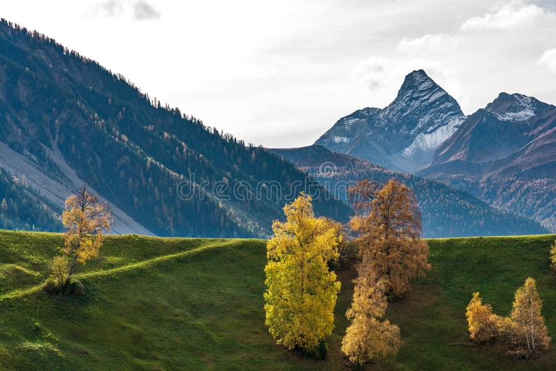 Automne en Davos Grisons Switzerland, arbres color?s jaunes images libres de droits