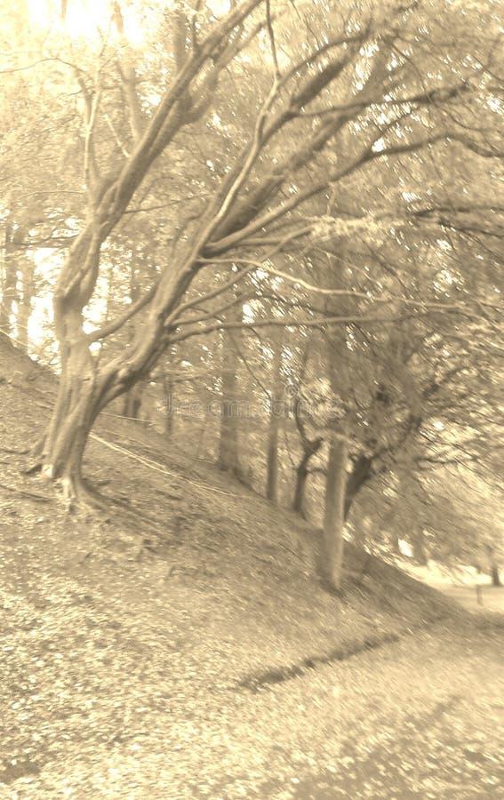 Automne en Ecosse - dans l'amour avec la nature images libres de droits