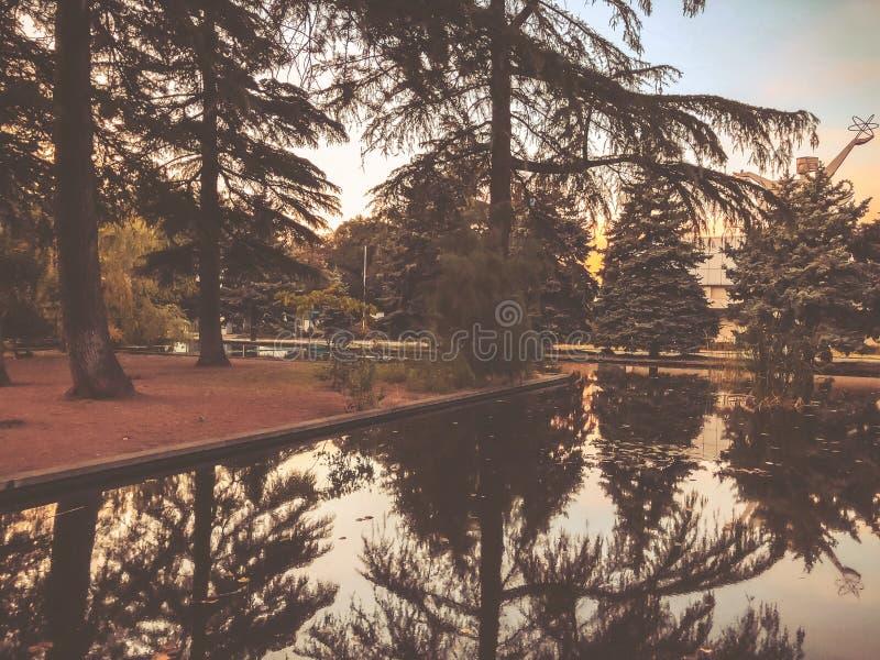 Automne en parc, arbres, roseaux près de l'étang, réflexion des arbres dans un étang Feuillage de chute Couleurs d'automne image libre de droits
