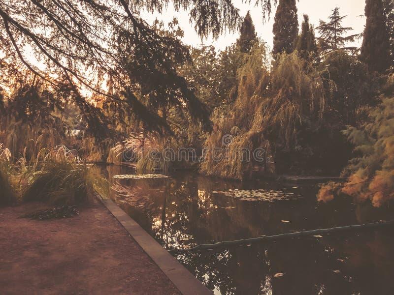 Automne en parc, arbres, roseaux près de l'étang, réflexion des arbres dans un étang Feuillage de chute Couleurs d'automne images libres de droits