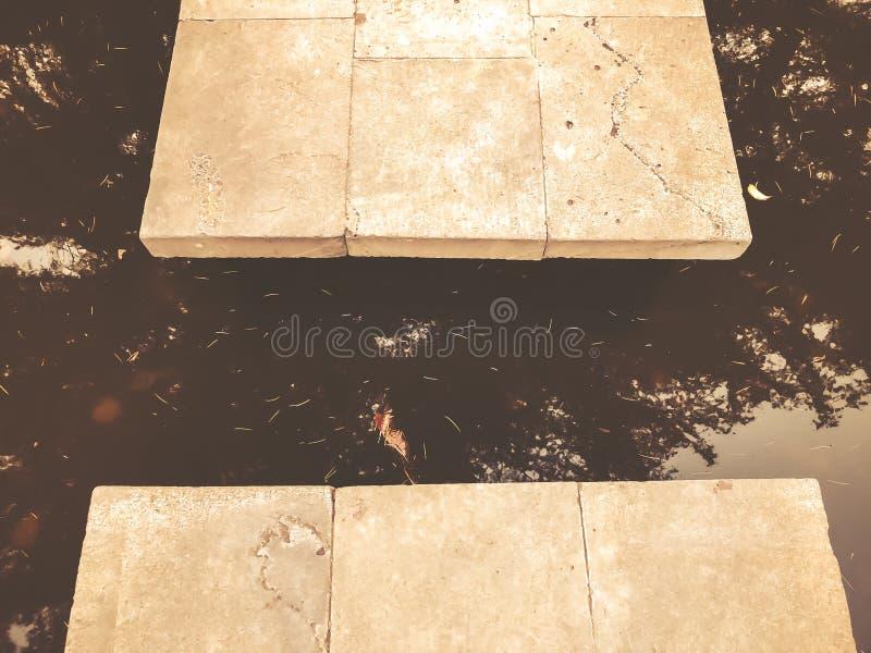 Automne en parc, arbres, roseaux près de l'étang, réflexion des arbres dans un étang Feuillage de chute Couleurs d'automne photographie stock libre de droits