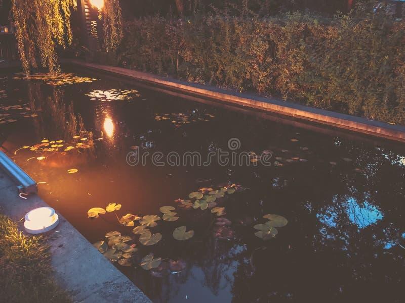 Automne en parc, arbres, roseaux près de l'étang, réflexion des arbres dans un étang Feuillage de chute Couleurs d'automne photographie stock