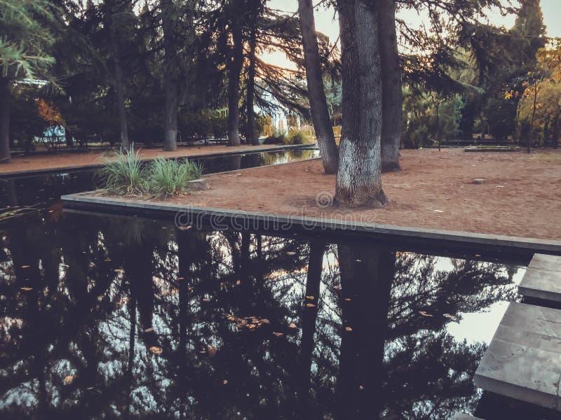 Automne en parc, arbres, roseaux près de l'étang, réflexion des arbres dans un étang Feuillage de chute Couleurs d'automne photo libre de droits
