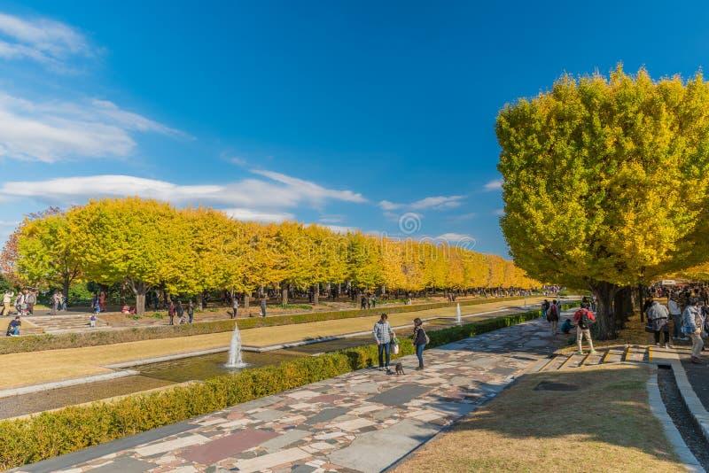 Automne en parc commémoratif de Showa, Tachikawa, Japon images libres de droits