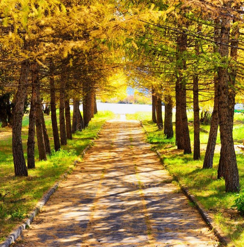 Automne en parc Coucher du soleil en parc image stock