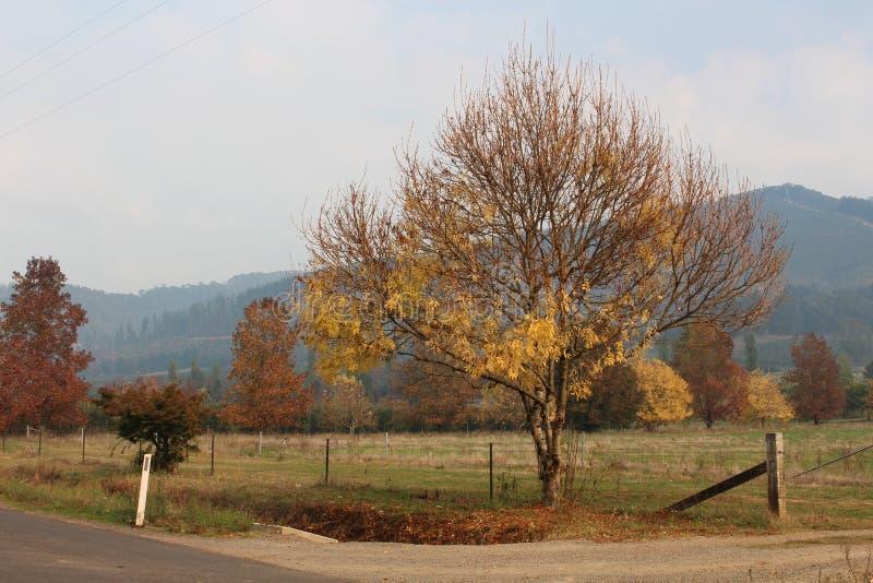 Automne en Victoria Region photos stock