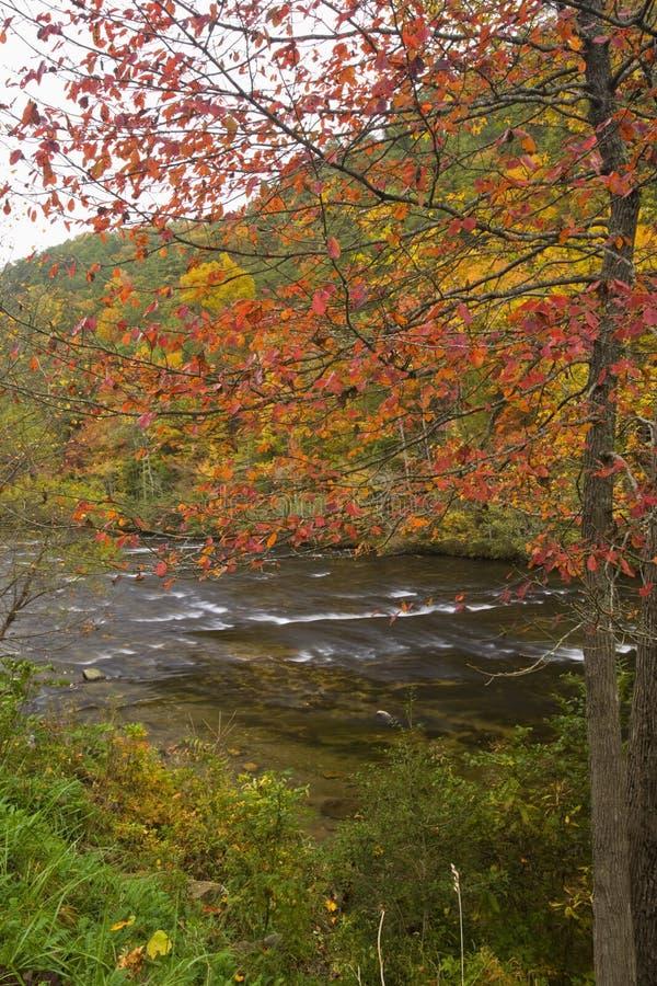 Automne, fleuve de Tellico, N-F cherokee photo stock