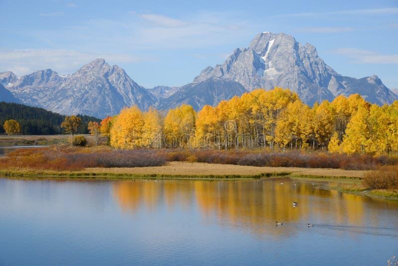 Automne grand de Teton image libre de droits