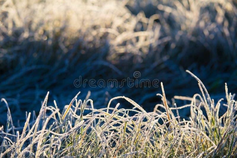 Automne Herbe de Frost avec la vue de plan rapproché de gel Matin froid images libres de droits