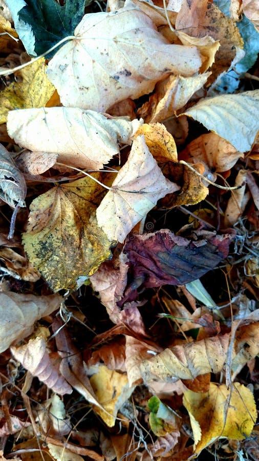 Automne /leaves 1 de Serie de photos images libres de droits