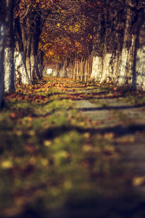 Automne paisible images stock