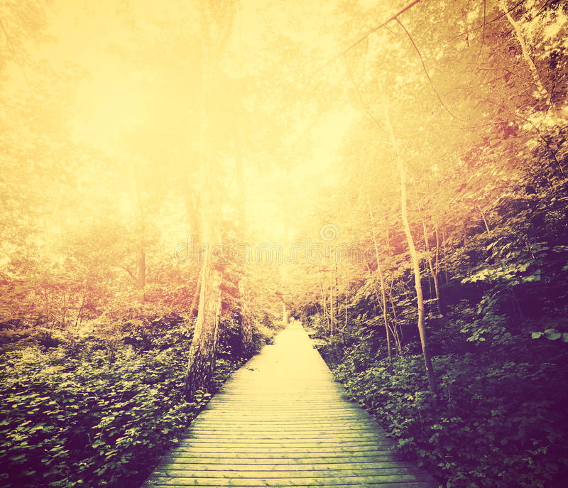 Automne, parc de chute Sun brillant par les feuilles rouges cru photos stock