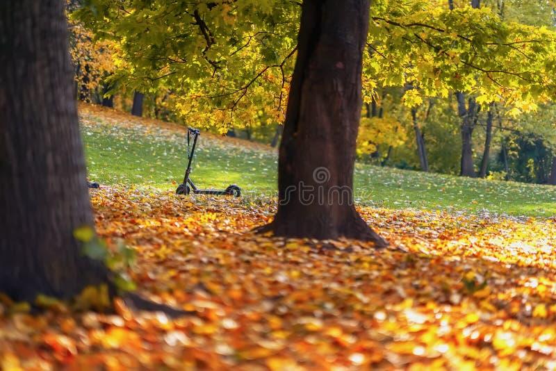 Automne Paysage pittoresque en parc, feuilles tombées d'érable, scooter, jour ensoleillé Concept d'humeur d'automne photo libre de droits