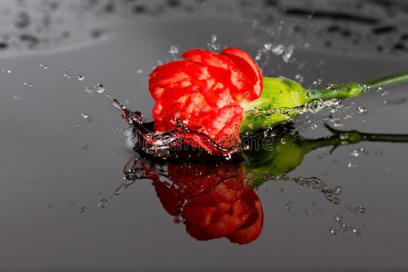 Automne rouge de fleur dans l'eau image stock
