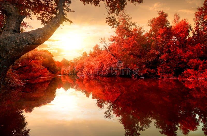 Automne rouge sur la rivière photographie stock libre de droits