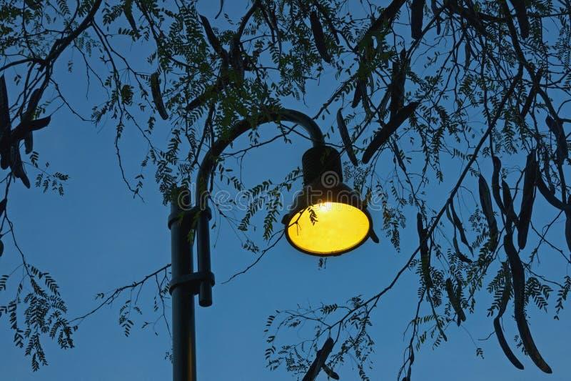 Automne Silhouettes de sauterelle de miel de branches d'arbre avec des feuilles et des cosses et le réverbère contre égaliser le  images stock