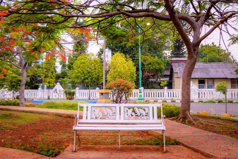 Automne sur un parc photos libres de droits