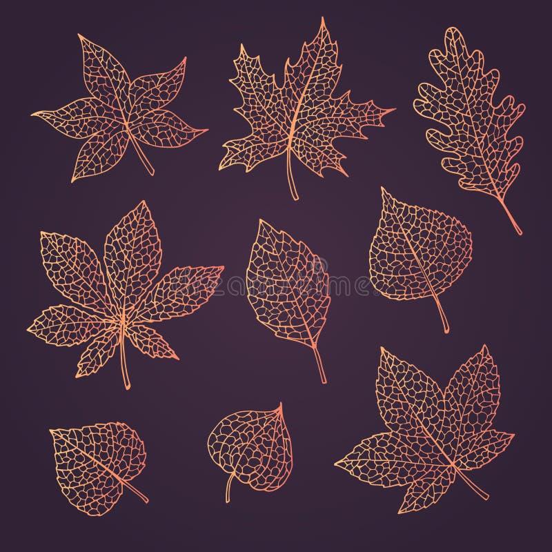 Automne tiré par la main de vecteur réglé avec le chêne, le peuplier, le hêtre, l'érable, le tremble et les feuilles de marron d' illustration stock
