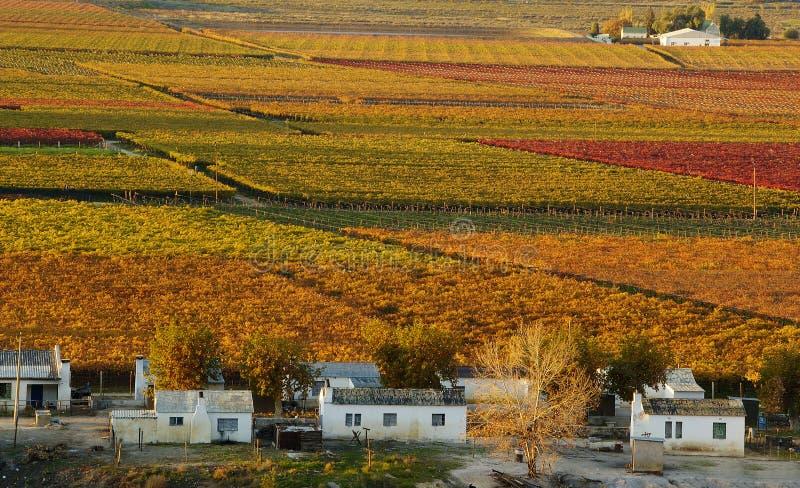 Automne Vineyards25 images libres de droits