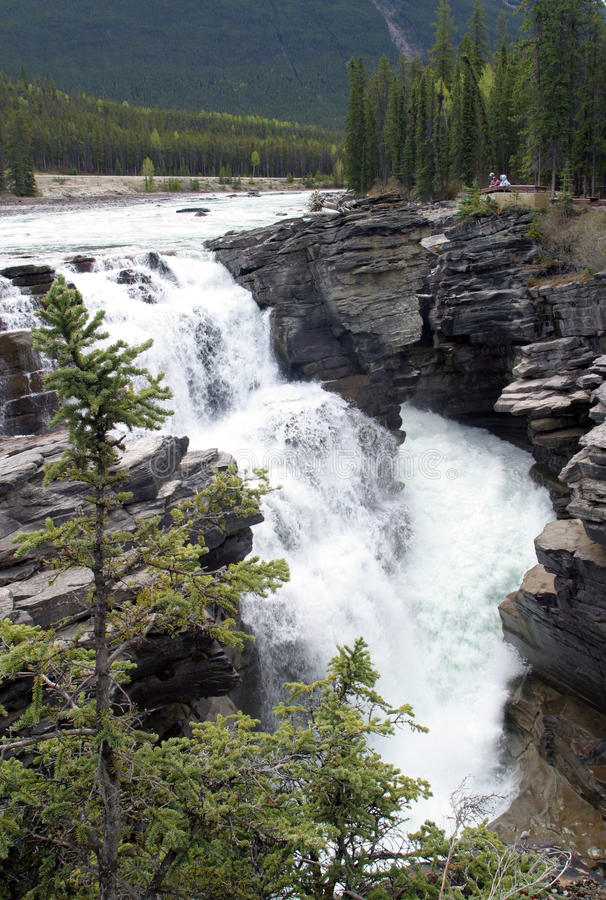 Automnes d'Athabasca photographie stock