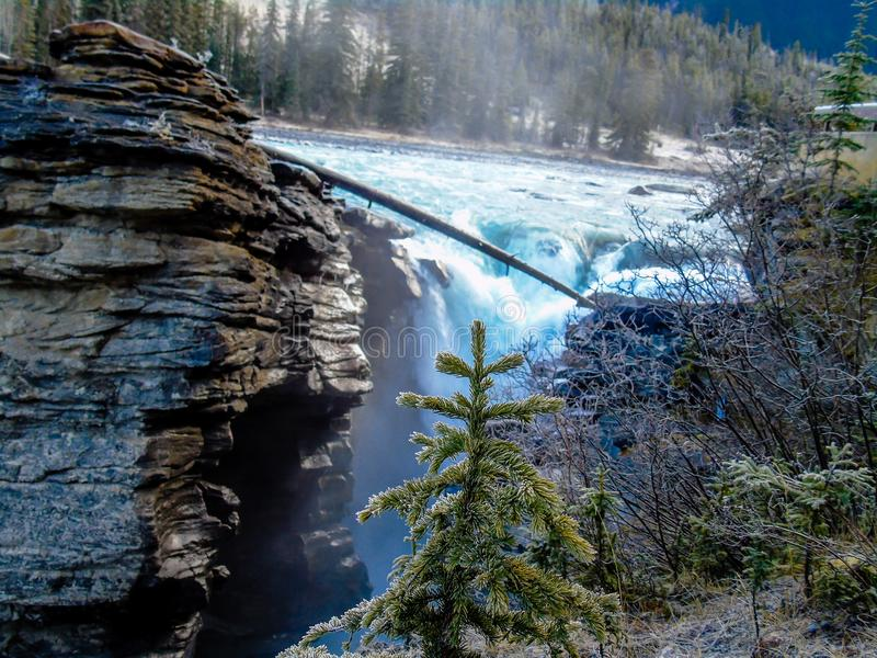 Automnes d'Athabaska, Jasper National Park, Alberta, Canada photos stock