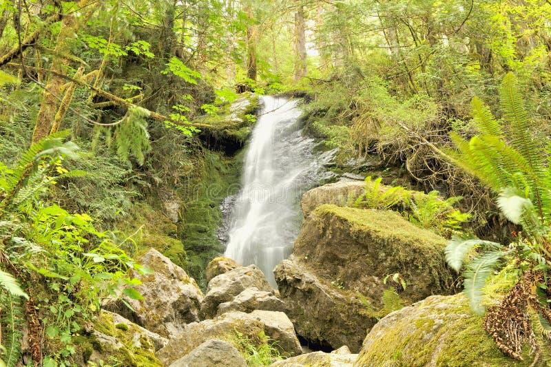 Automnes de Merriman, forêt humide tempérée de Quinault image stock