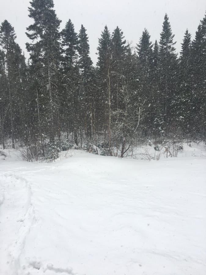 Automnes de neige photographie stock