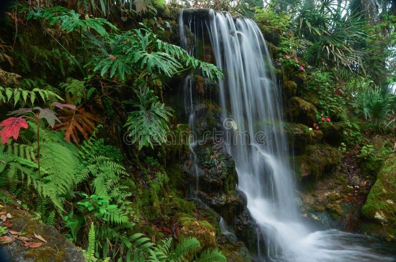 Automnes tropicaux photo libre de droits