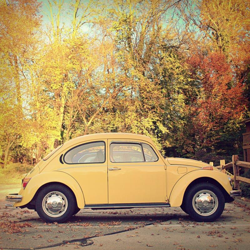 Automobile classica dello scarabeo di VW con il fogliame grazioso di autunno nei precedenti immagini stock