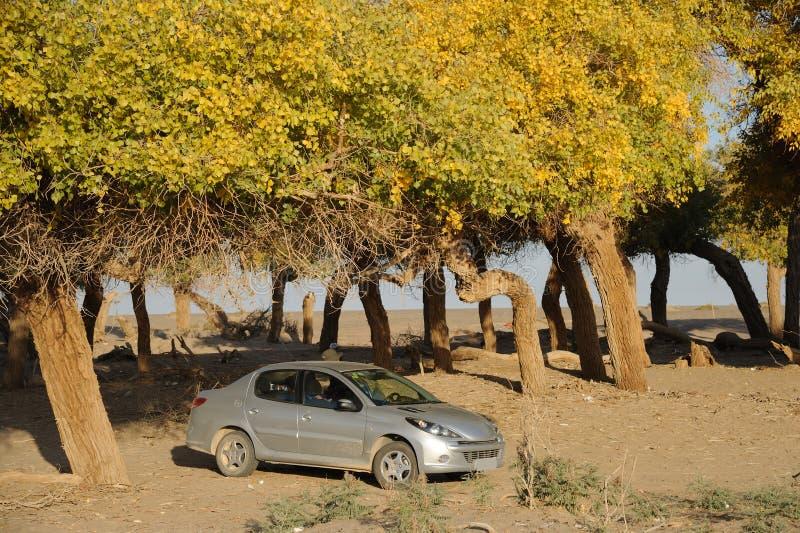 Automobile con gli alberi di autunno fotografia stock libera da diritti