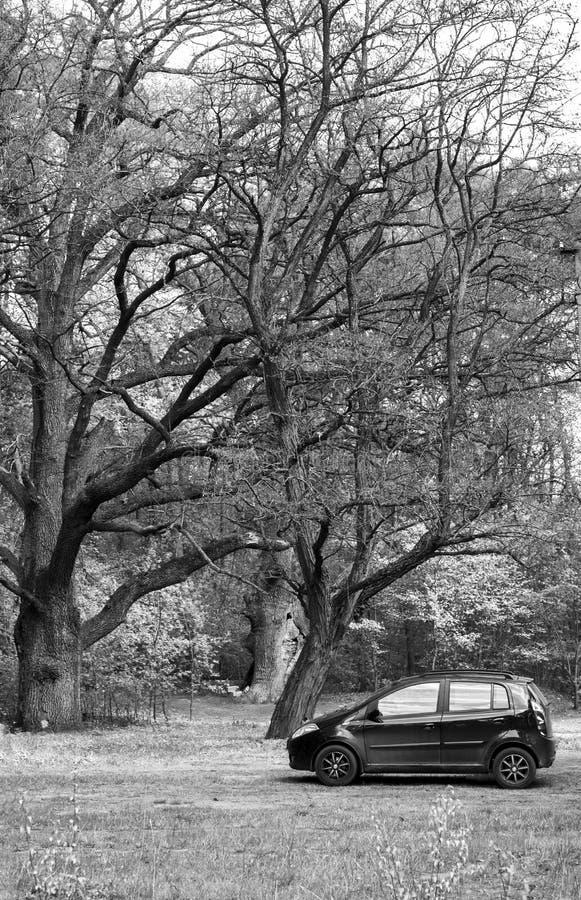 Download Automobile nella foresta fotografia stock. Immagine di polvere - 55351496