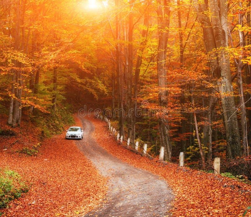 Automobile su un sentiero nel bosco Carpatico, Ucraina, Europa immagine stock