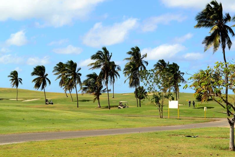 Automobili di golf e palme un giorno ventoso Varadero, Cuba fotografie stock