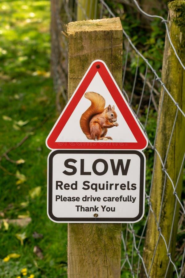 Automobilisti d'avvertimento del segno degli scoiattoli rossi fotografie stock