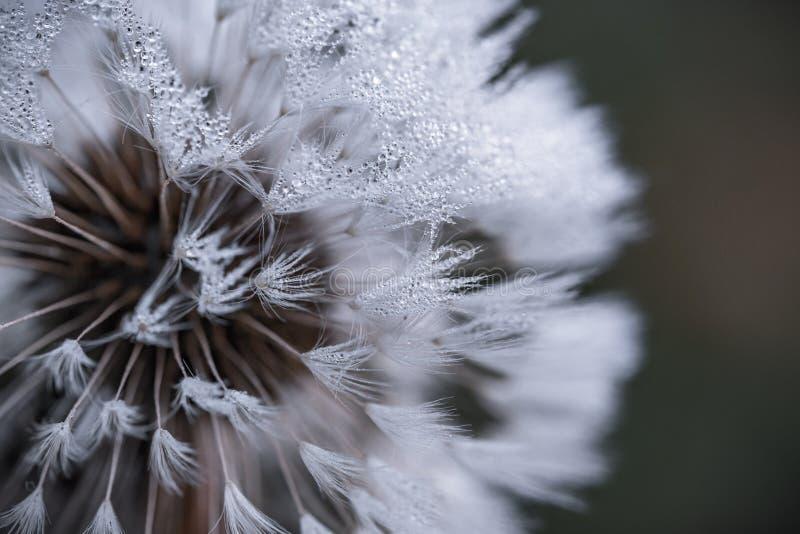 Autonadrukfotografie van Witte Bloem royalty-vrije stock fotografie