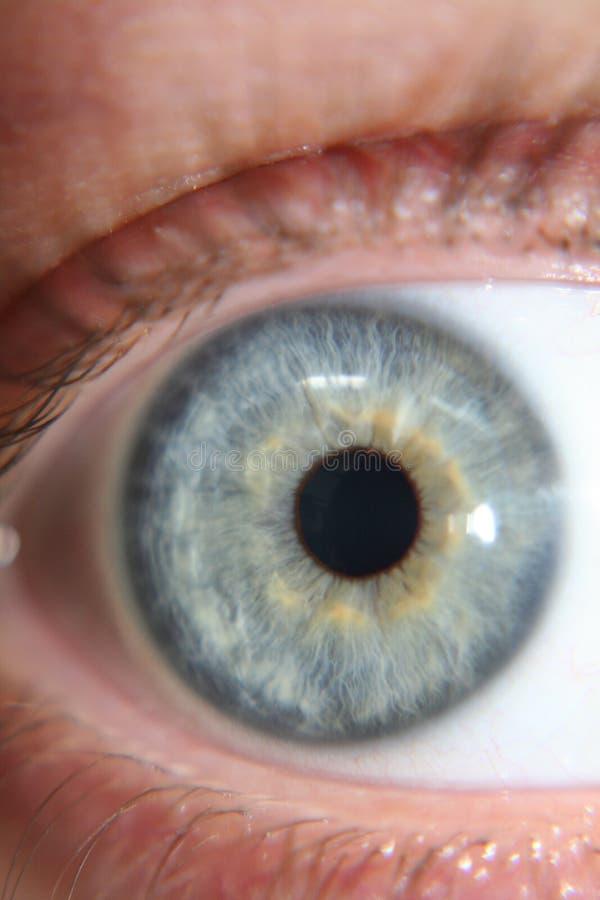 Autoportrait d'oeil bleu photographie stock