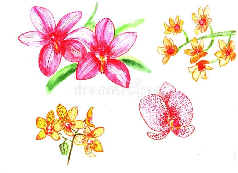 autor kwitnie i obrazu obrazka ustaloną akwarelę Orchidea royalty ilustracja