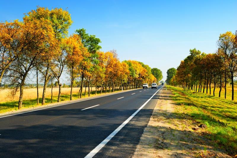 Autos auf Datenbahn zwischen Herbstbäumen stockfotos