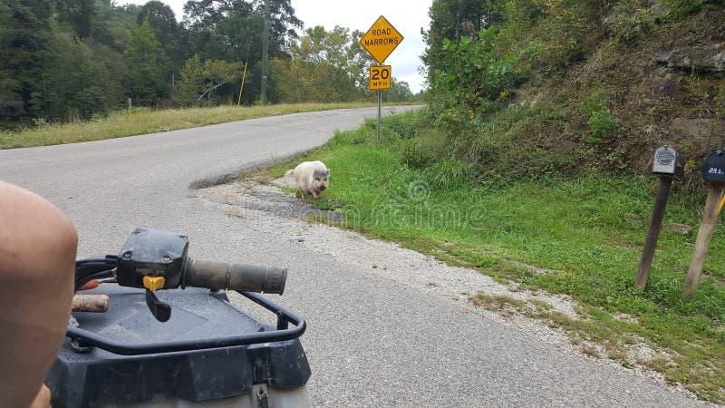 autostopowicz zdjęcie royalty free
