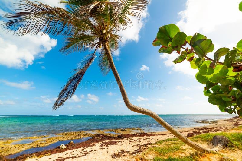 Autre Bord-stranden i Guadeloupe arkivbilder