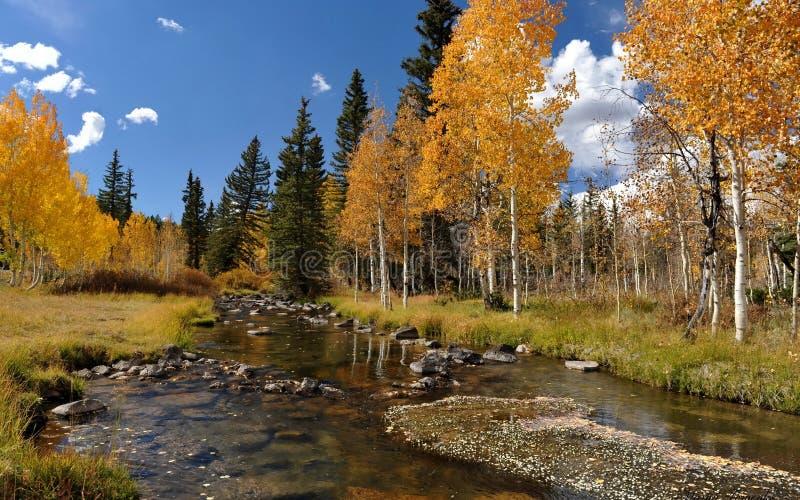 Download Autum在森林里 库存照片. 图片 包括有 天空, 叶子, 本质, 结构树, 森林, 云彩, 橙色 - 30330158