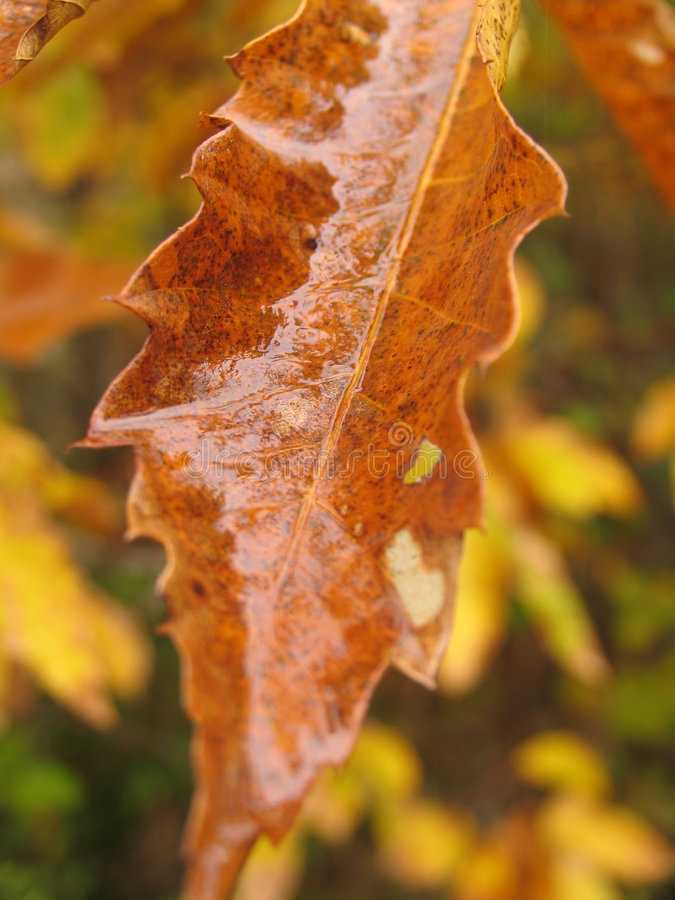 Download Autum 2 Royalty Free Stock Photo - Image: 182725