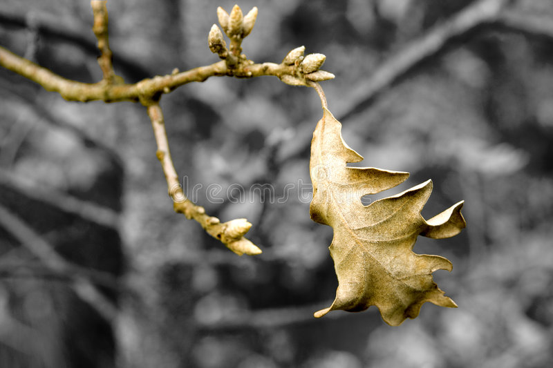 Download Autum stock image. Image of fall, lonelyness, branch, bright - 2618401