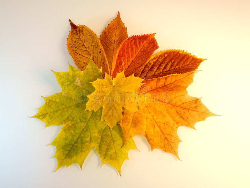 Autum. Background with colorful fall leaves stock photography