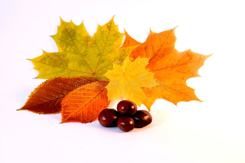 Autum. Background with colorful fall leaves royalty free stock photography